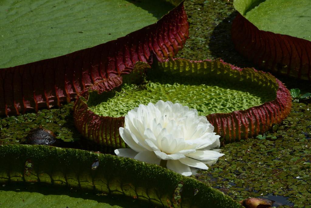 Lotus Brésil voyage