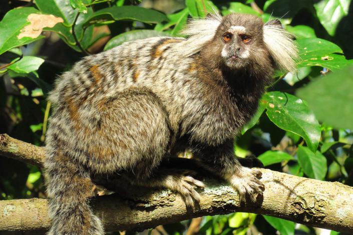 animaux Ilha Grande Rio Brésil voyage